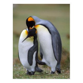 Dos pingüinos postal