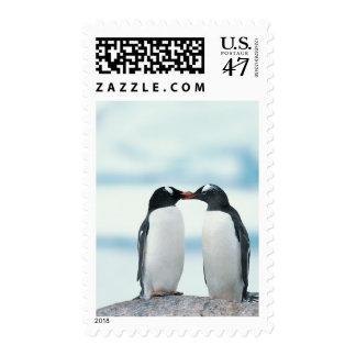 Dos pingüinos que tocan los picos estampilla
