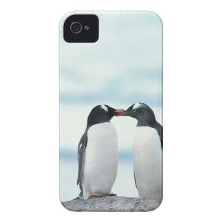 Dos pingüinos que tocan los picos iPhone 4 Case-Mate cárcasas