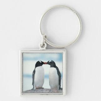 Dos pingüinos que tocan los picos llaveros