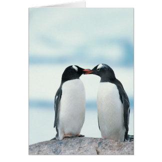 Dos pingüinos que tocan los picos tarjeta de felicitación
