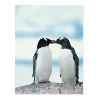 Dos pingüinos que tocan los picos tarjeta postal