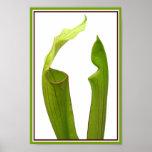 Dos plantas de jarra verdes poster