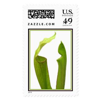 Dos plantas de jarra verdes timbres postales