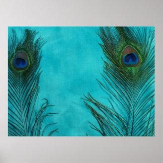 Dos plumas del pavo real de la aguamarina póster
