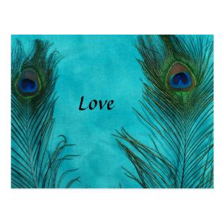 Dos plumas del pavo real de la aguamarina tarjetas postales