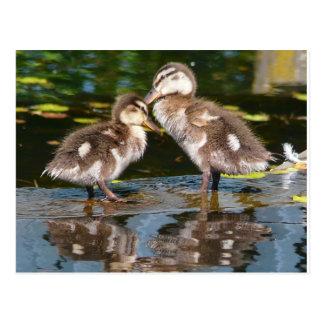 Dos poco Duckies Postal