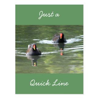Dos pollas de agua tarjeta postal