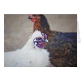 Dos pollos tarjetas