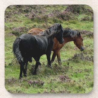 Dos potros de Dartmoor que vagan por en el brezo Posavasos