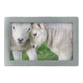 Dos que abrazan y corderos blancos de amor hebilla de cinturon rectangular