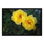 Dos rosas amarillos arte fotográfico
