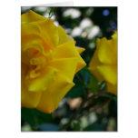 Dos rosas amarillos con las hojas - fotografía de  felicitaciones
