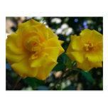 Dos rosas amarillos con las hojas - fotografía de postal