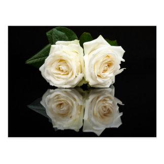 Dos rosas blancos con imagen de espejo en negro tarjetas postales