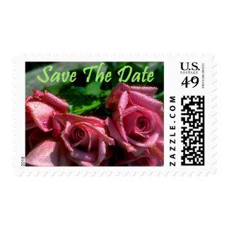 Dos rosas rosados sellos