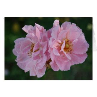 Dos rosas rosados felicitaciones