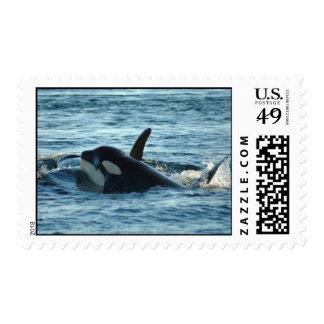 Dos sellos de las orcas