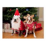 Dos terrieres de Boston en trajes del navidad Tarjetas Postales