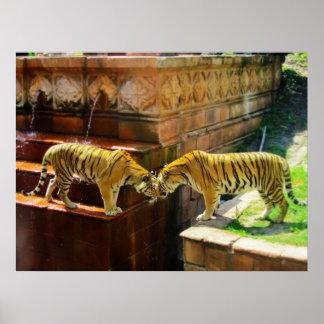 Dos tigres posters