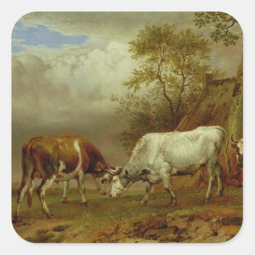 Dos toros con los cuernos bloqueados, 1653 pegatina cuadrada
