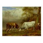 Dos toros con los cuernos bloqueados, 1653 tarjetas postales