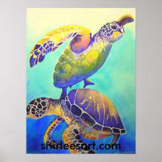 Dos tortugas de mar verde póster