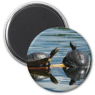 Dos tortugas en la barra de la tortuga imán redondo 5 cm