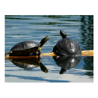 Dos tortugas en la barra de la tortuga postales