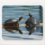 Dos tortugas en la barra de la tortuga tapetes de ratón