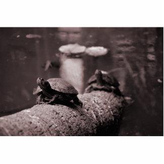 dos tortugas en sepia del tronco de la palma esculturas fotográficas