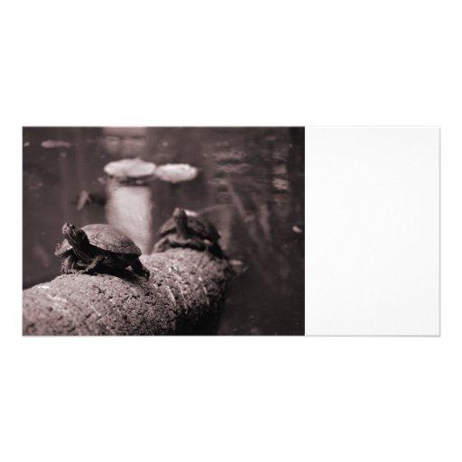 dos tortugas en sepia del tronco de la palma tarjetas fotograficas