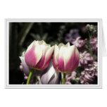 Dos tulipanes felicitaciones