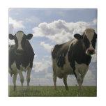 Dos vacas frisias azulejos cerámicos