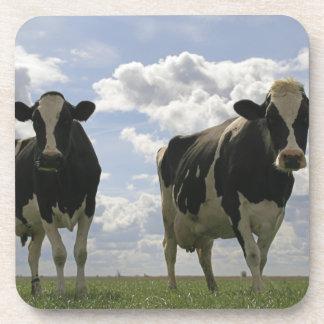Dos vacas frisias posavasos