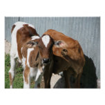 Dos vacas posters