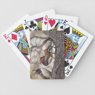 Dos varones que compiten para un pato de mandarín  baraja de cartas