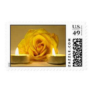 dos velas color de rosa de flor amarilla brillante sellos