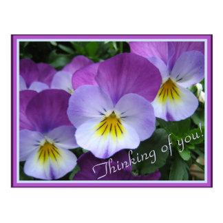 Dos violas de la púrpura de los tonos tarjeta postal