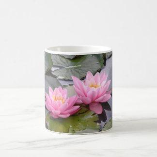 Dos waterlilies del rosa salvaje en una charca taza de café