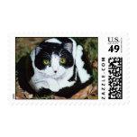 """Dot"" cat rock stamp"