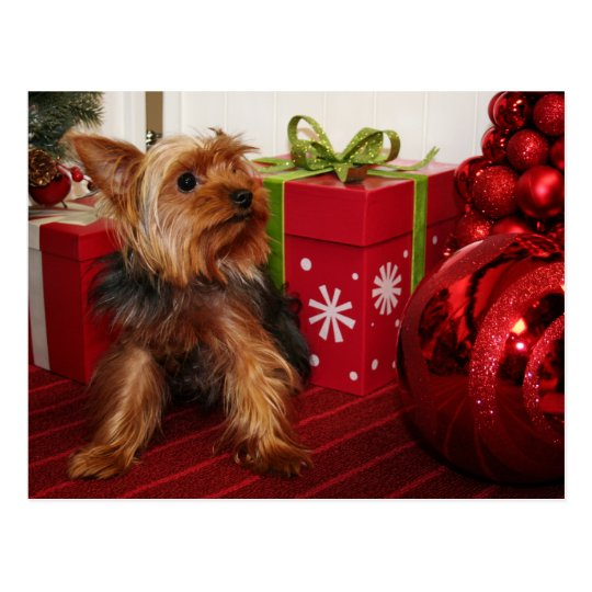 Dot - Yorkshire Terrier - Rodgers Postcard