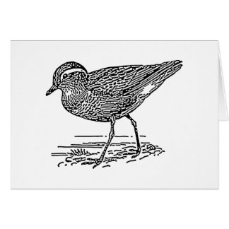 Dotterel Bird Line Art Card