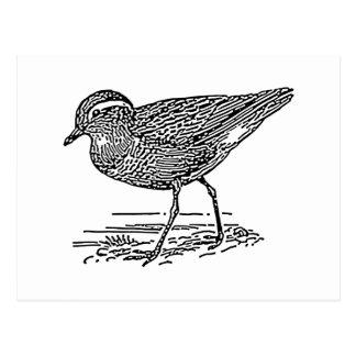 Dotterel Bird Line Art Postcard