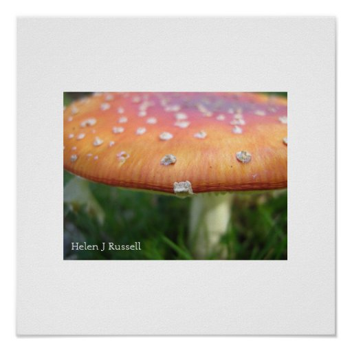 Dotty toadstool poster