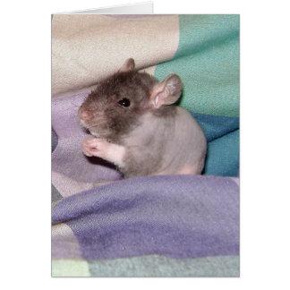 Doube Rex Baby Rat Card