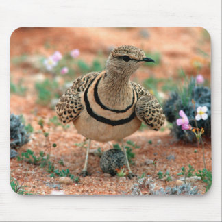 Double-Banded Curser (Rhinoptilus Africanus) Mouse Pad