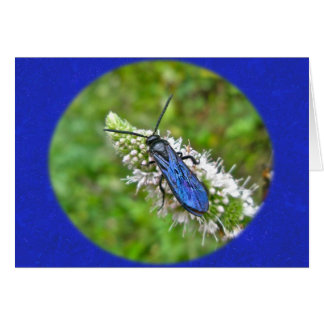 Double Banded Scoliid Wasp on Mint Card