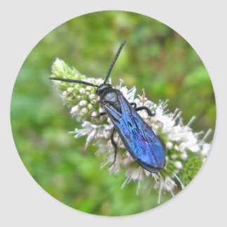 Double Banded Scoliid Wasp on Mint Classic Round Sticker