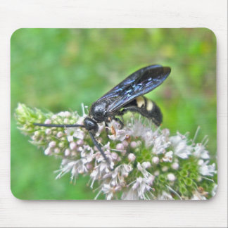 Double Banded Scoliid Wasp on Mint Mouse Pad